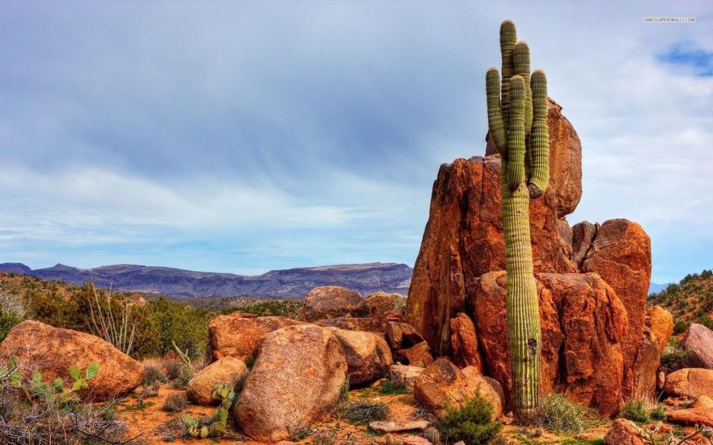 saguaro-desert-1349-1680x1050